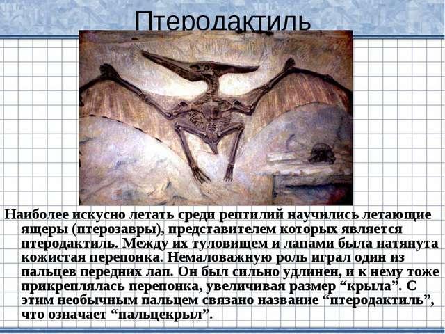 Птеродактиль Наиболее искусно летать среди рептилий научились летающие ящеры...