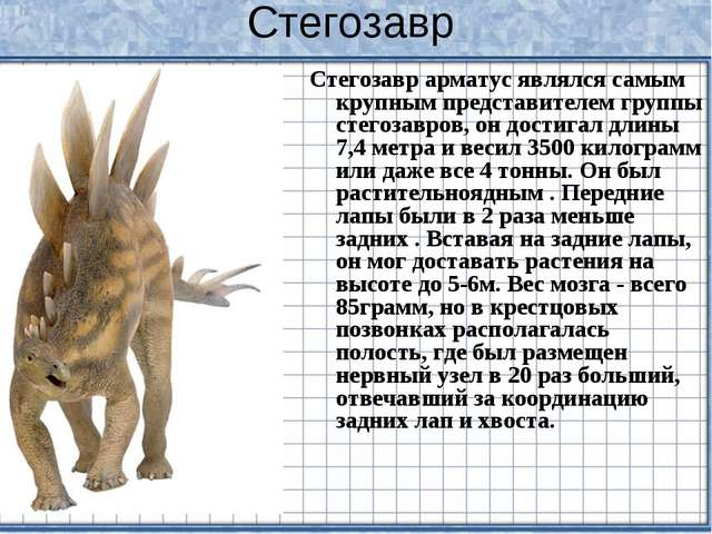 Стегозавр Стегозавр арматус являлся самым крупным представителем группы стего...