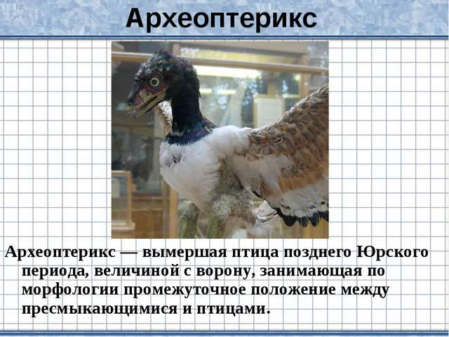 Археоптерикс Археоптерикс — вымершая птица позднего Юрского периода, величино...