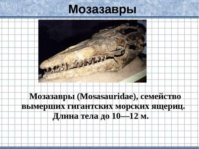 Мозазавры (Mosasauridae), семейство вымерших гигантских морских ящериц. Длин...