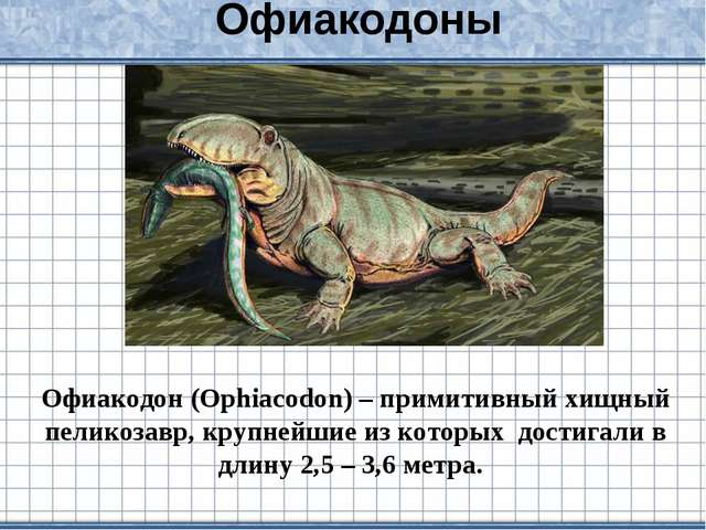 Офиакодоны Офиакодон (Ophiacodon) – примитивный хищный пеликозавр, крупнейшие...