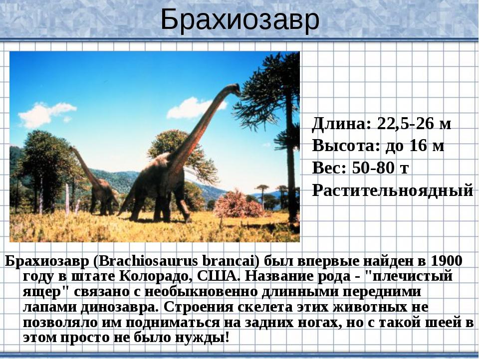 Брахиозавр Брахиозавр (Brachiosaurus brancai) был впервые найден в 1900 году...