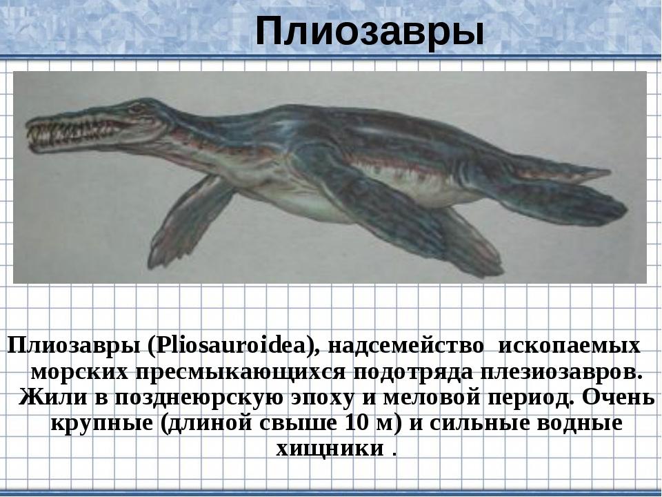 Плиозавры (Pliosauroidea), надсемейство ископаемых морских пресмыкающихся под...