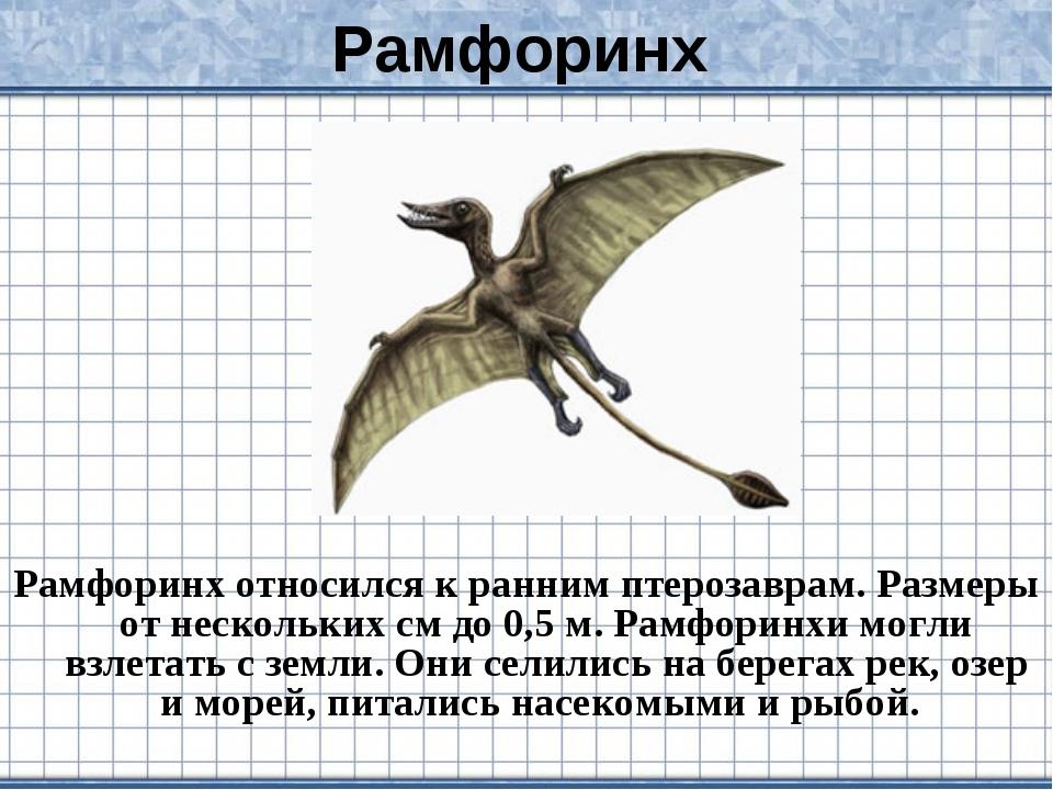 Рамфоринх Рамфоринх относился к ранним птерозаврам. Размеры от нескольких см...