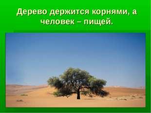 Дерево держится корнями, а человек – пищей.