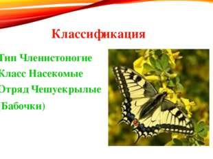 Классификация Тип Членистоногие Класс Насекомые Отряд Чешуекрылые (Бабочки)