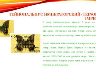 ТЕЙНОПАЛЬПУС ИМПЕРАТОРСКИЙ (TEINOPALPUS IMPERIALIS) К роду тейнопальпусов отн