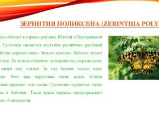 ЗЕРИНТИЯ ПОЛИКСЕНА (ZERINTHIA POLYXENA) Поликсена обитает в горных районах Юж