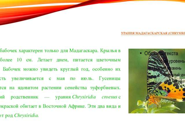 УРАНИЯ МАДАГАСКАРСКАЯ (CHRYSIRIDIA RIPHAEUS) Этот вид бабочек характерен толь...