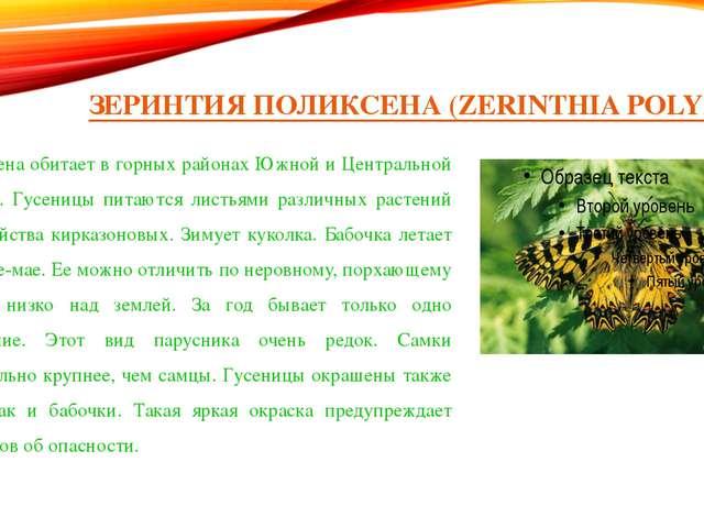 ЗЕРИНТИЯ ПОЛИКСЕНА (ZERINTHIA POLYXENA) Поликсена обитает в горных районах Юж...