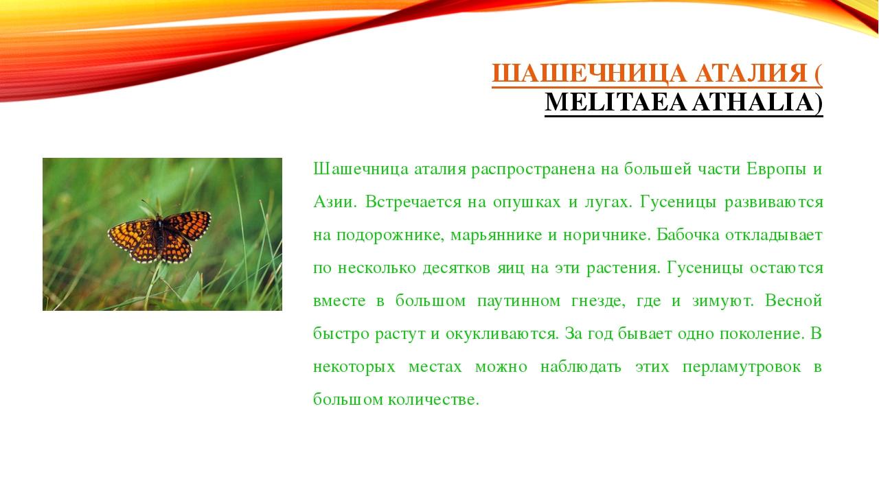 ШАШЕЧНИЦА АТАЛИЯ (MELITAEA ATHALIA) Шашечница аталия распространена на больше...