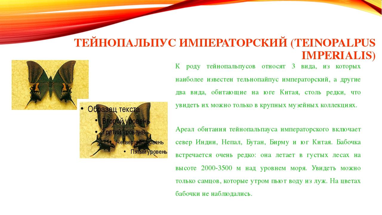 ТЕЙНОПАЛЬПУС ИМПЕРАТОРСКИЙ (TEINOPALPUS IMPERIALIS) К роду тейнопальпусов отн...