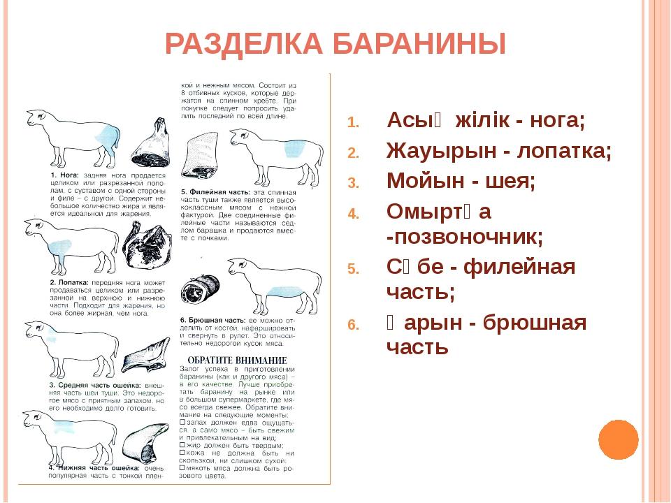 РАЗДЕЛКА БАРАНИНЫ Асық жiлiк - нога; Жауырын - лопатка; Мойын - шея; Омыртқа...
