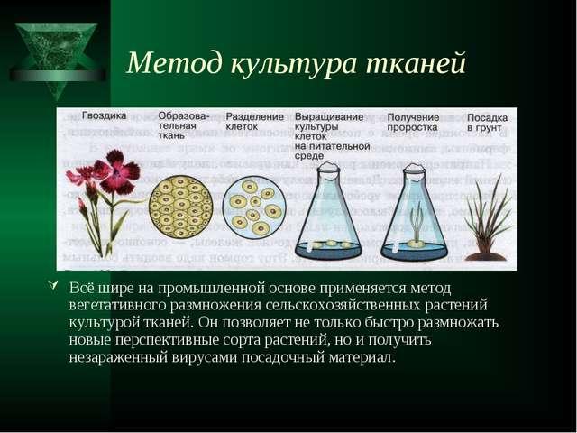 Метод культура тканей Всё шире на промышленной основе применяется метод вегет...