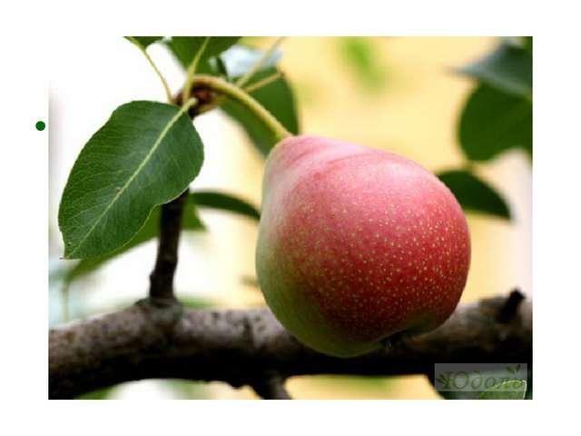 Что за фрукт на вкус хорош И на лампочку похож, Бок зеленый солнцем греет, О...
