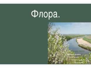 Флора. Несмотря на малую площадь (231 гектар), участки заповедника обладают ч