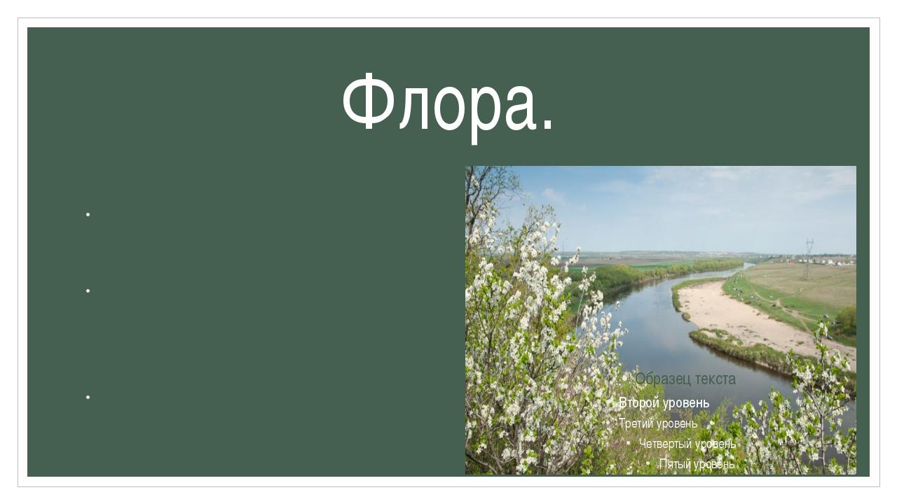 Флора. Несмотря на малую площадь (231 гектар), участки заповедника обладают ч...