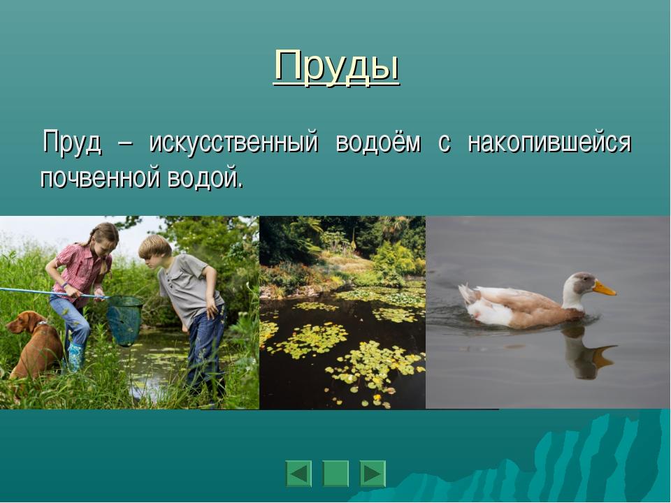 Пруды Пруд – искусственный водоём с накопившейся почвенной водой.