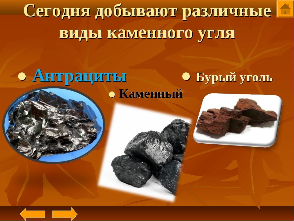 Сегодня добывают различные виды каменного угля ● Антрациты ● Бурый уголь ● Ка...