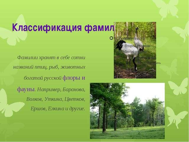 Классификация фамилий Фамилии хранят в себе сотни названий птиц, рыб, животны...