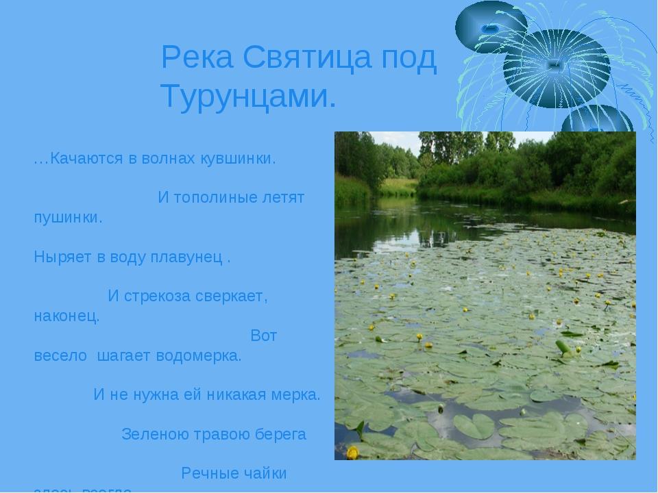 Река Святица под Турунцами. …Качаются в волнах кувшинки. И тополиные летят пу...