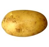 4 potatoes картофель - Овощи - Презентация по биологии - 900 детских презентаций - Детские развивающие игры