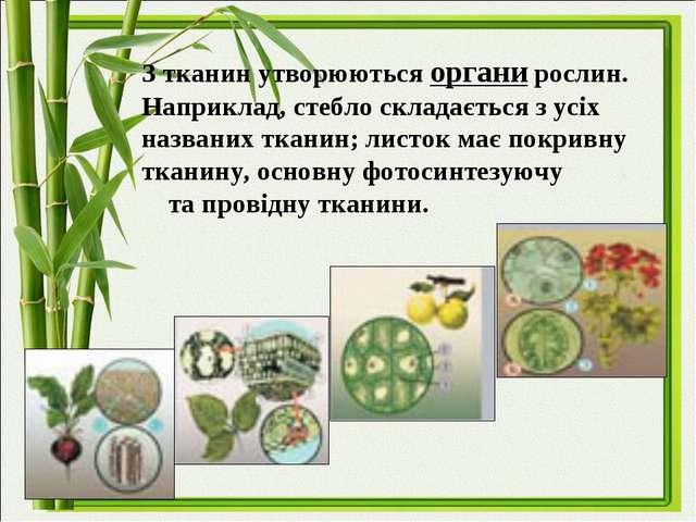З тканин утворюються органи рослин. Наприклад, стебло складається з усіх назв...