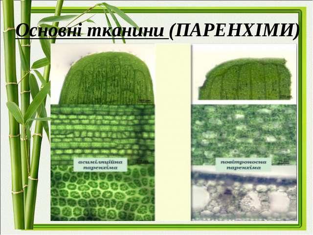 Основні тканини (ПАРЕНХІМИ)