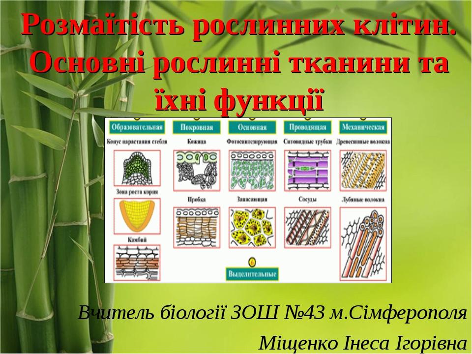 Розмаїтість рослинних клітин. Основні рослинні тканини та їхні функції Вчител...