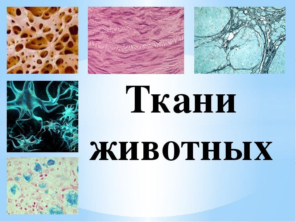 картинки на тему ткани человека финляндии делает обворожительные