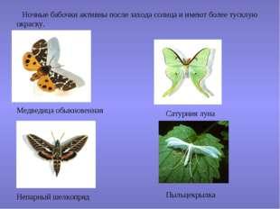 Ночные бабочки активны после захода солнца и имеют более тусклую окраску. Ме