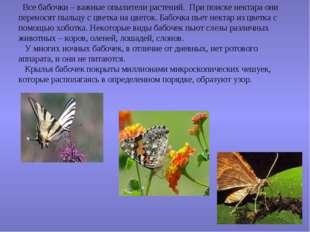 Все бабочки – важные опылители растений. При поиске нектара они переносят пы