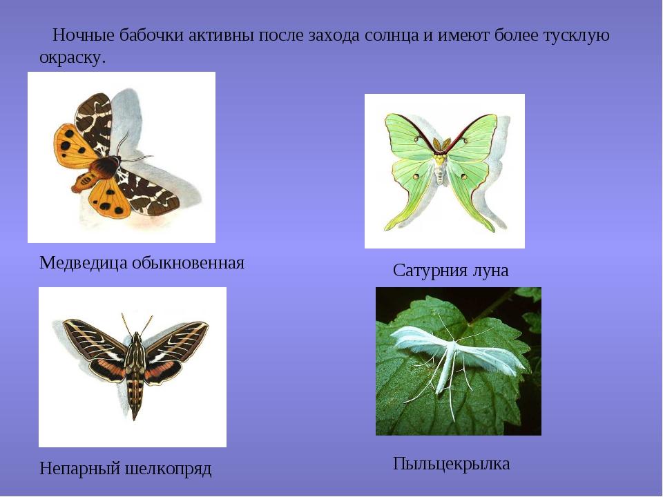 Ночные бабочки активны после захода солнца и имеют более тусклую окраску. Ме...
