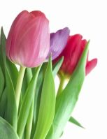 Сценарий 8 марта для средней группы детского сада