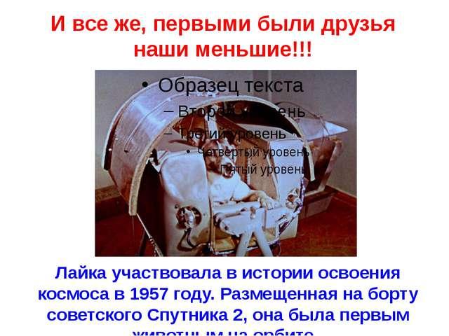 Лайка участвовала в истории освоения космоса в 1957 году. Размещенная на борт...