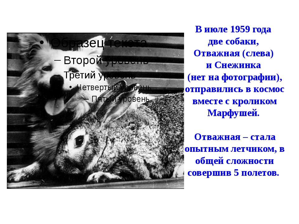 В июле 1959 года две собаки, Отважная (слева) и Снежинка (нет на фотографии),...