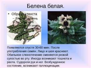 Белена белая. Появляются спустя 30-60 мин. После употребления семян. Лицо и ш