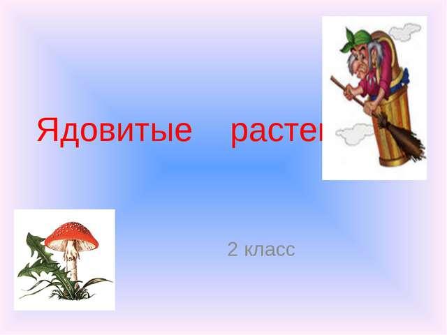 Ядовитые растения 2 класс