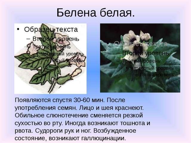 Белена белая. Появляются спустя 30-60 мин. После употребления семян. Лицо и ш...