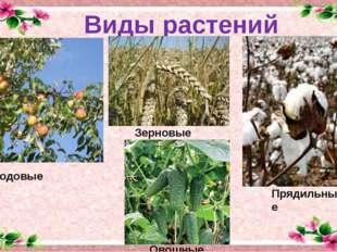 Виды растений Плодовые Зерновые Овощные Прядильные