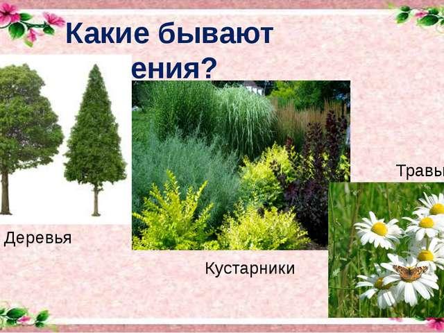 Какие бывают растения? Деревья Кустарники Травы