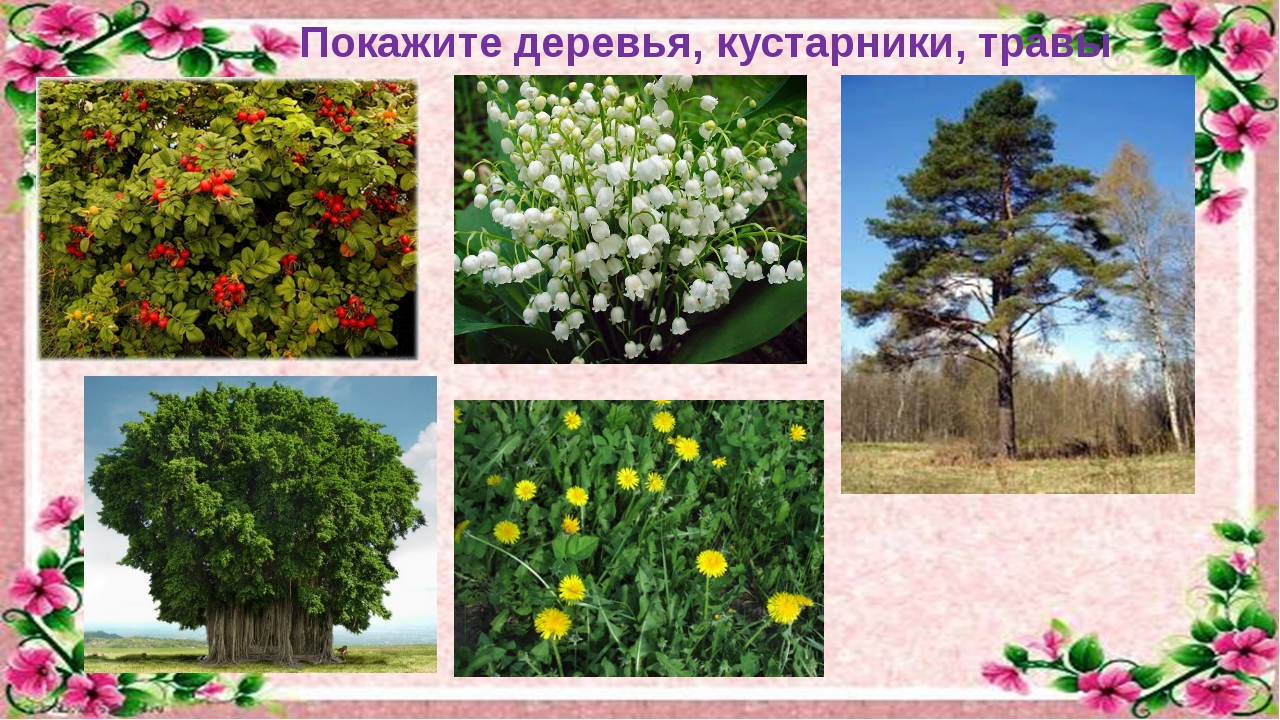 Покажите деревья, кустарники, травы