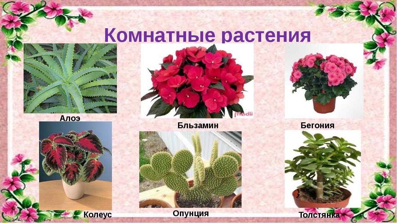 Комнатные растения и их и уход за ними