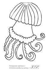 раскраска медуза, морские раскраски медуза, раскраски медуза морские обитатели, раскраски медуза морские животные