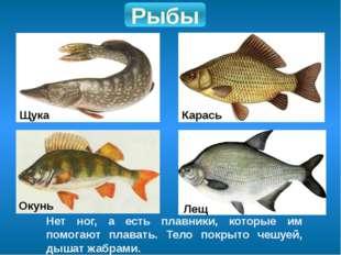 Рыбы Нет ног, а есть плавники, которые им помогают плавать. Тело покрыто чешу
