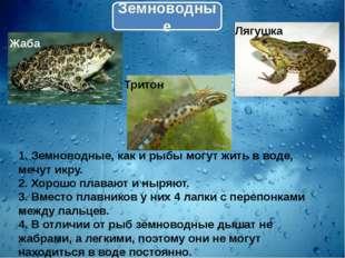 Земноводные 1. Земноводные, как и рыбы могут жить в воде, мечут икру. 2. Хоро