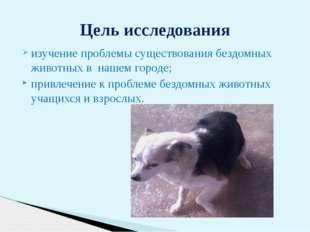 изучение проблемы существования бездомных животных в нашем городе; привлечени