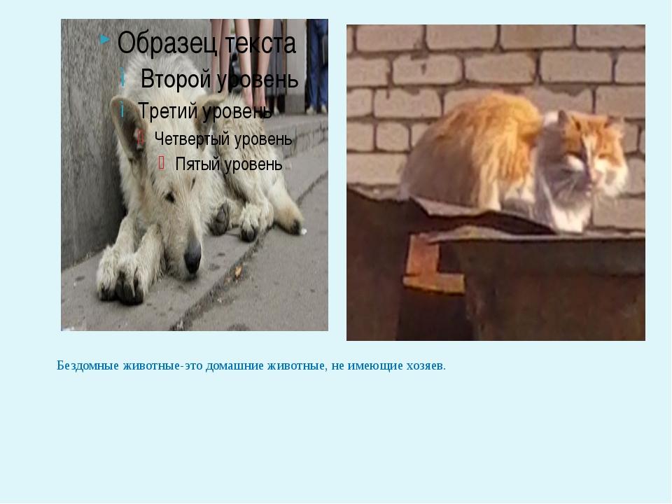 Бездомные животные-это домашние животные, не имеющие хозяев.