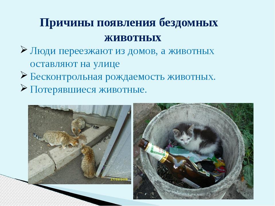 Причины появления бездомных животных Люди переезжают издомов, аживотных ос...