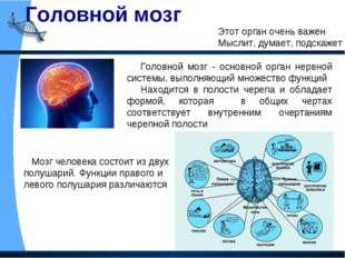 Головной мозг Этот орган очень важен Мыслит, думает, подскажет Головной мозг